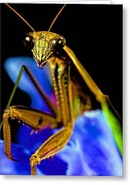 Closeup Macro Of The Praying Mantis Greeting Card by Leslie Crotty