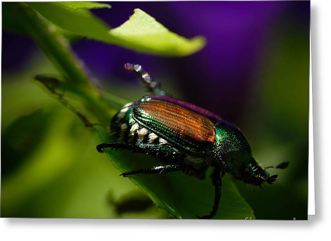 Closeup Of Beetle Greeting Card by Amy Cicconi