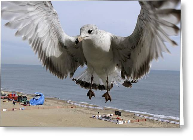 Closeup Of Hovering Seagull Greeting Card