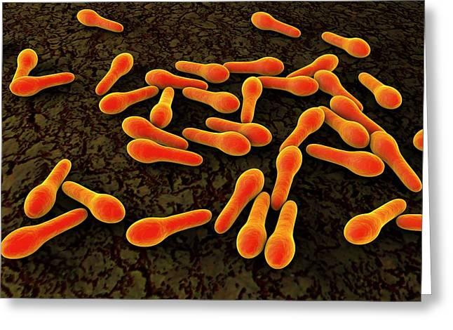 Clostridium Tetani Bacteria Greeting Card