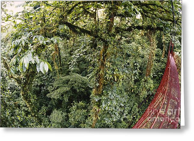 Cloud Forest Canopy Greeting Card