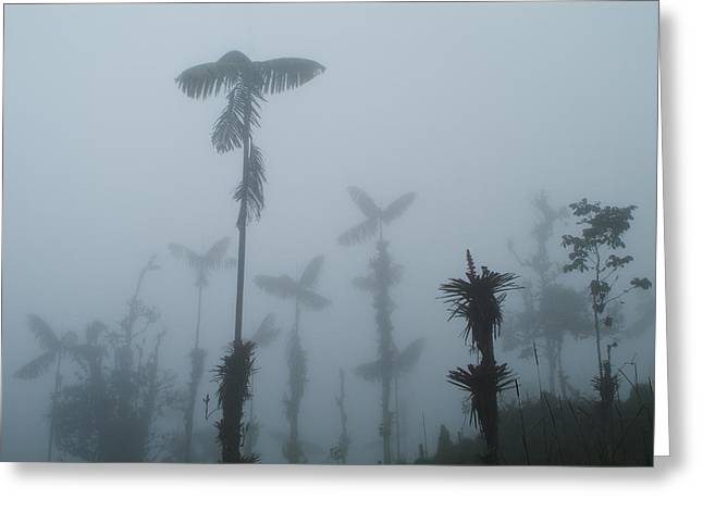 Greeting Card featuring the photograph Cloud Forest  by Lana Enderle