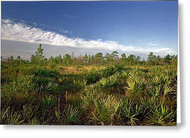 Cloud Line And Palmetto. Triple N Ranch.   Greeting Card