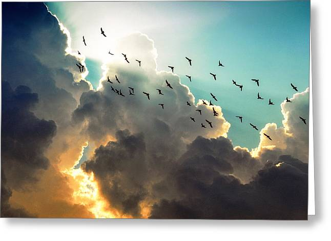 Clouds And Birds Greeting Card by Dorothy Walker