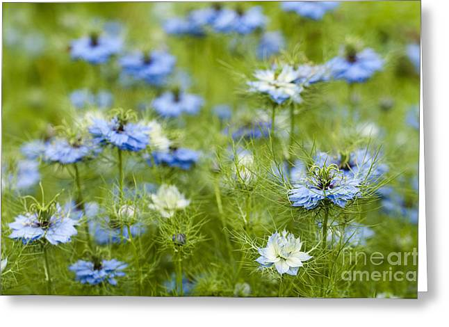 Clouds Of Blue Greeting Card by Anne Gilbert