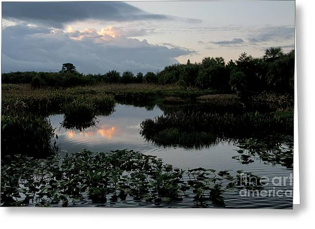 Clouds Over Green Cay Wetlands Greeting Card by Mark Newman