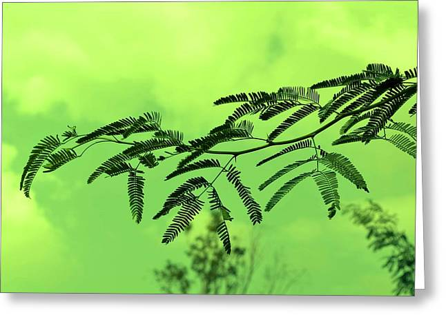 Cloudy Green Nature Greeting Card by Deepti Chahar