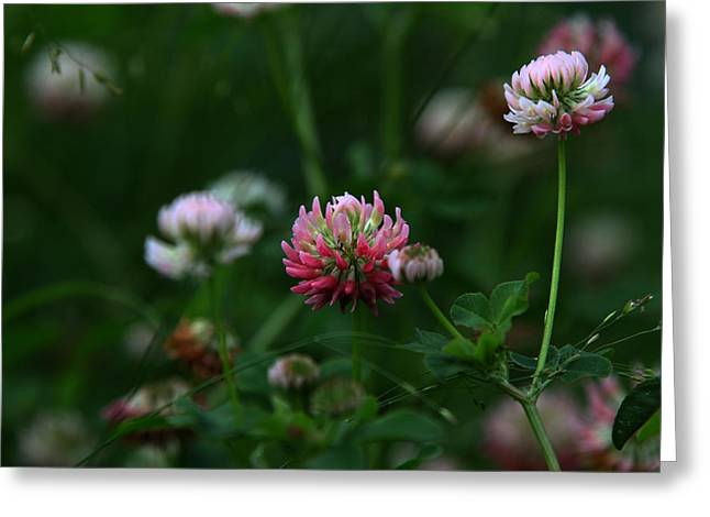 Clover Greeting Card by Dee Carpenter