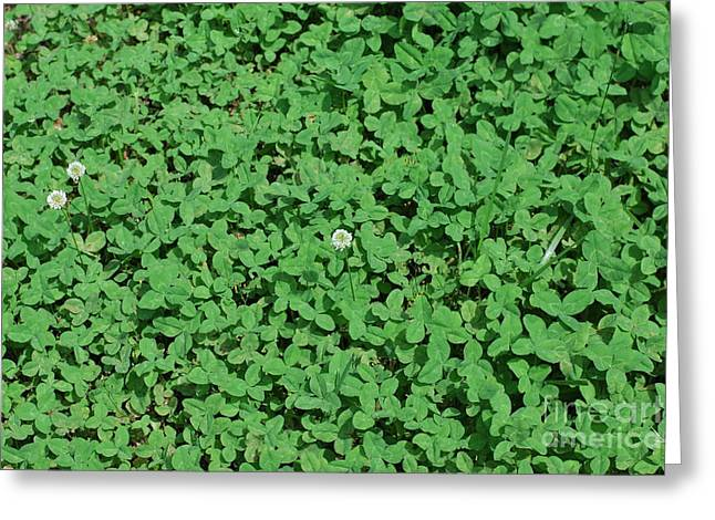 Clover Greeting Card by Gayle Melges