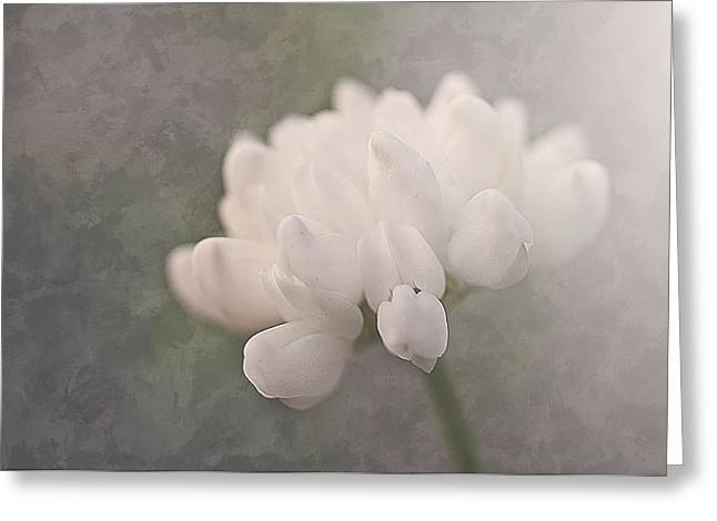 Clover In White Greeting Card by Faith Simbeck