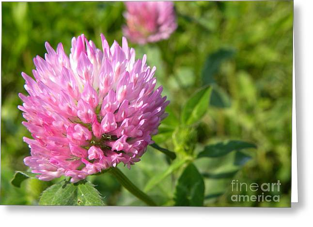 Clover Greeting Card by Laura Yamada