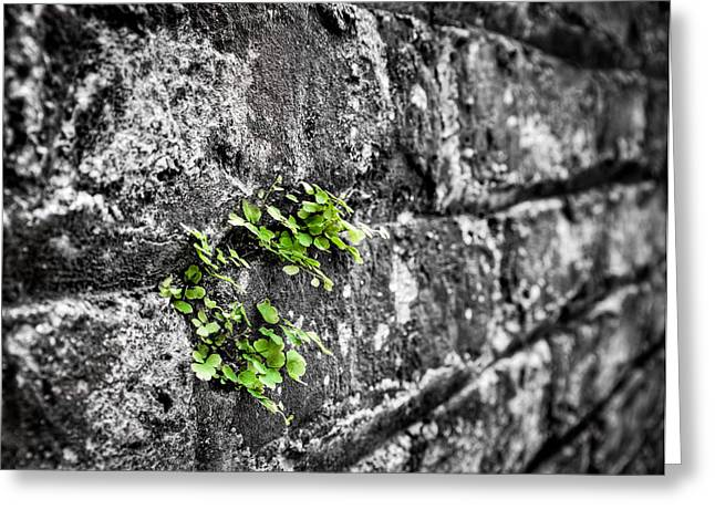 Clover On The Wall Greeting Card by Andrew Crispi