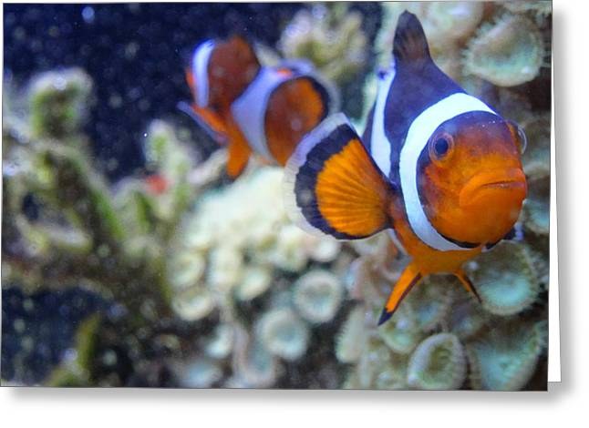 Clown Fish Couple Greeting Card