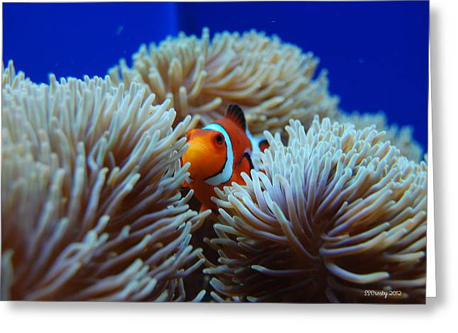 Clown Fish In Sea Anemone Greeting Card