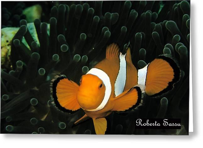 Clown Fish Greeting Card by Roberta Sassu