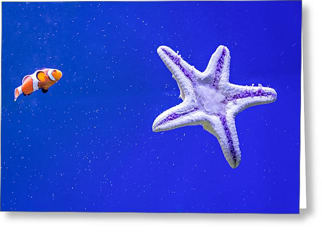 Clownfish And Starfish Greeting Card by Steve Harrington