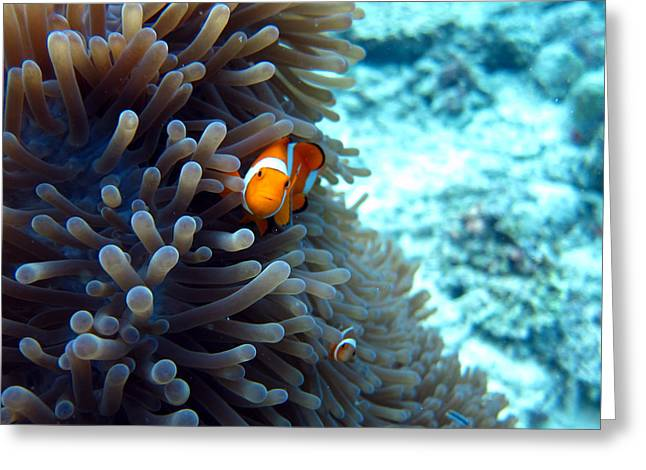 Clownfish Borneo Greeting Card by Laura Hiesinger