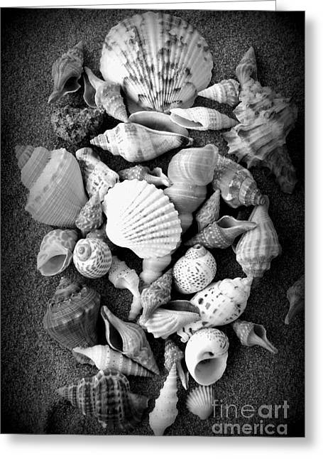 Cluster Of Shells Greeting Card by Diane Reed