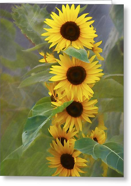 Cluster Of Sunflowers Greeting Card