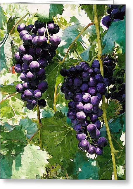 Clusters Of Red Wine Grapes Hanging On The Vine Greeting Card