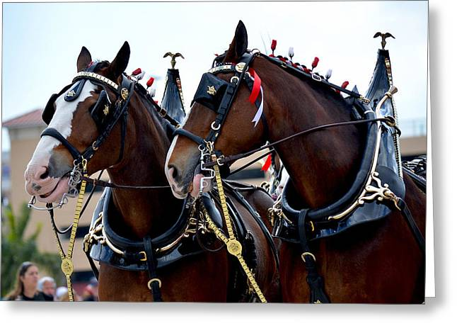 Greeting Card featuring the photograph Clydesdales 2 by Amanda Vouglas