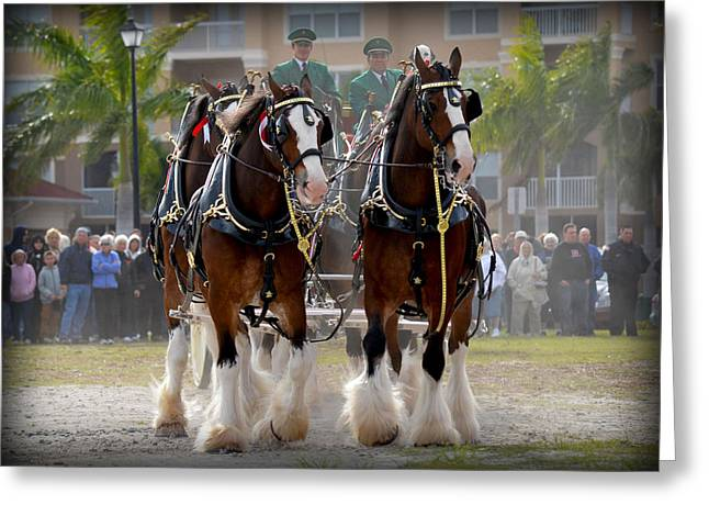 Greeting Card featuring the photograph Clydesdales 4 by Amanda Vouglas