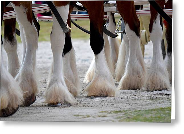 Clydesdales 5 Greeting Card by Amanda Vouglas