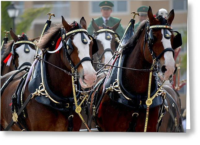 Greeting Card featuring the photograph Clydesdales by Amanda Vouglas