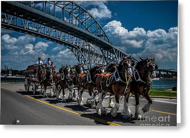 Clydesdales And Blue Water Bridges Greeting Card