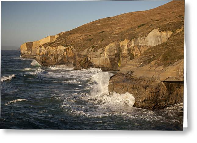 Coast And Tunnel Beach Otago New Zealand Greeting Card by Colin Monteath