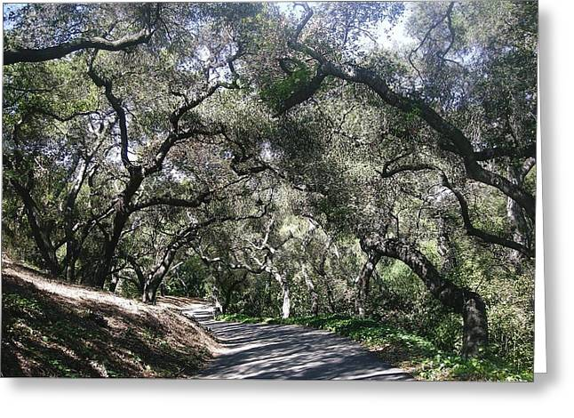 Coast Live Oaks Greeting Card