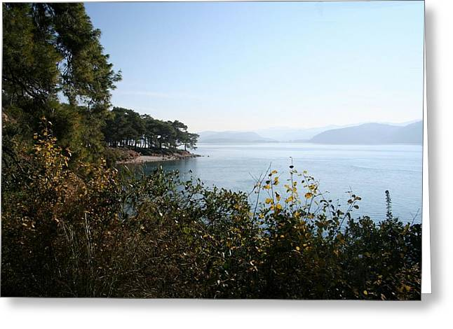 Greeting Card featuring the photograph Coast by Tracey Harrington-Simpson