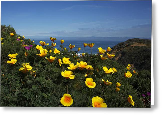 Greeting Card featuring the photograph Coastal California Poppies by Susan Rovira