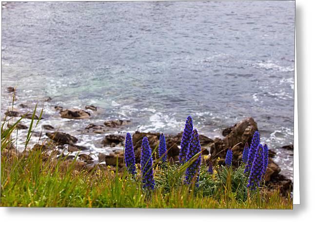 Coastal Cliff Flowers Greeting Card by Melinda Ledsome