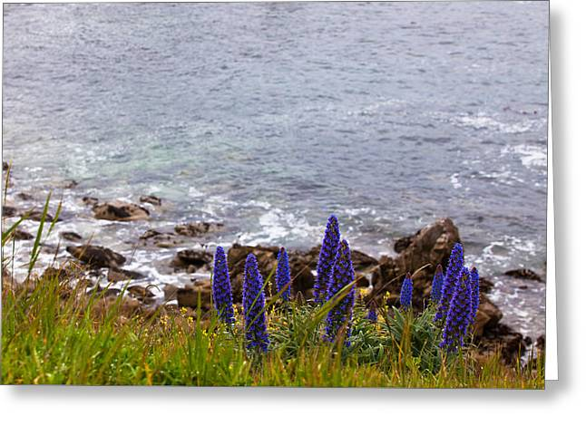 Coastal Cliff Flowers Greeting Card