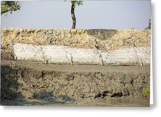 Coastal Flood Defences In The Sunderbans Greeting Card by Ashley Cooper