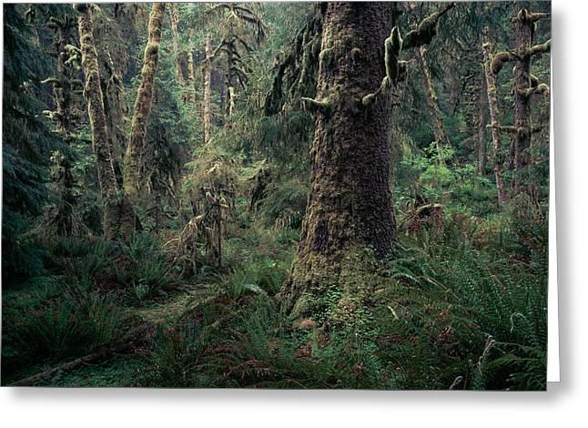 Coastal Forest 3 Greeting Card
