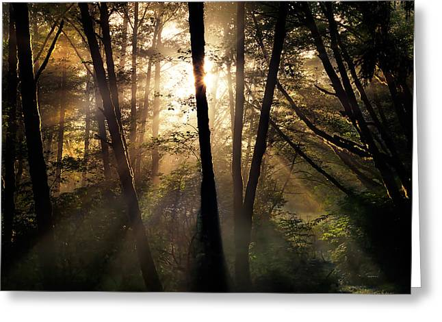 Coastal Forest Light Greeting Card by Leland D Howard