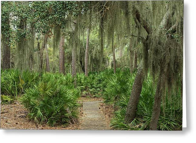 Coastal Forest With Spanish Moss Greeting Card by Pete Oxford