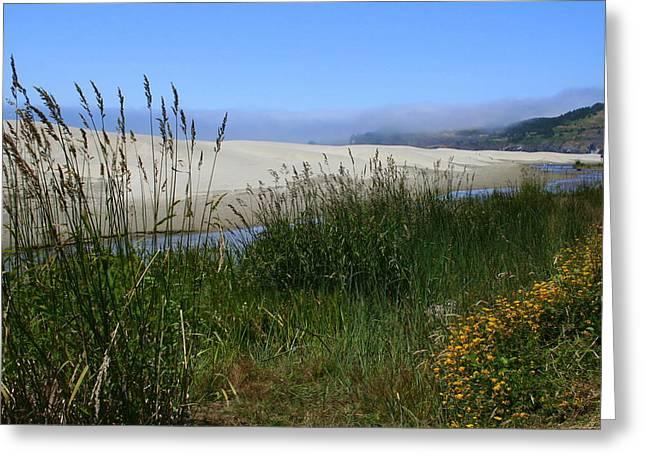 Coastal Grasslands Greeting Card by Debra Kaye McKrill