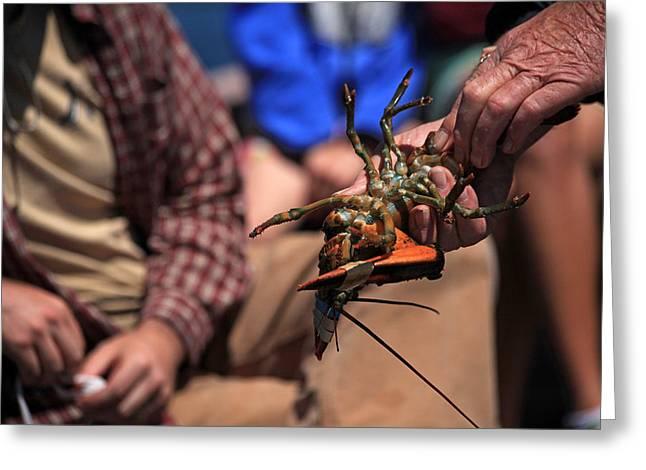 Coastal Maine Is Lobster Greeting Card by Karol Livote
