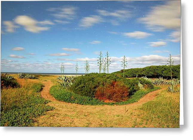 Coastal Plants Greeting Card by Luis Argerich