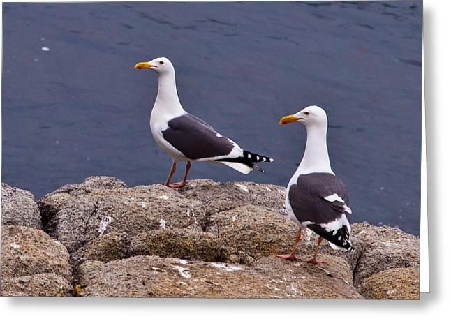 Coastal Seagulls Greeting Card by Melinda Ledsome