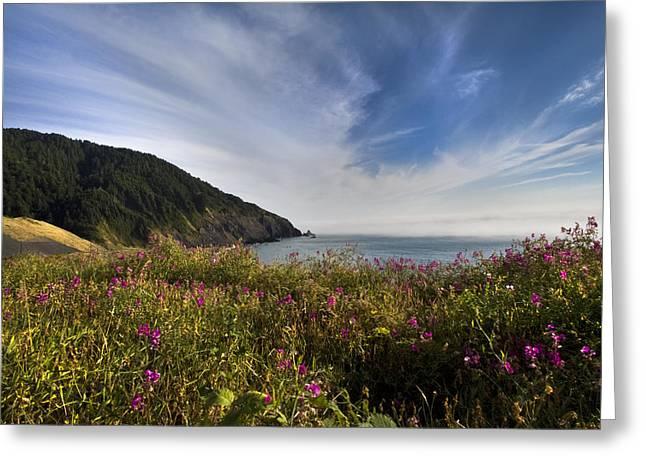 Coastal Wildflowers Of Oregon Greeting Card by Debra and Dave Vanderlaan