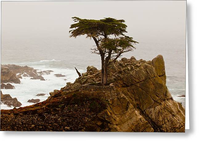 Coastline Cypress Greeting Card