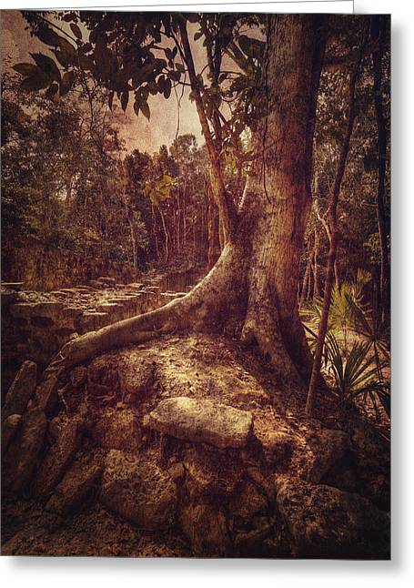 Coba Tree Greeting Card by Stuart Deacon