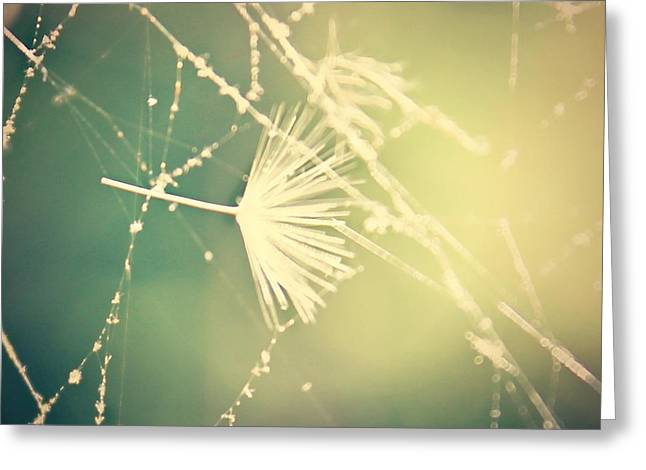 Greeting Card featuring the photograph Cobweb Dandelion Seed by Candice Trimble