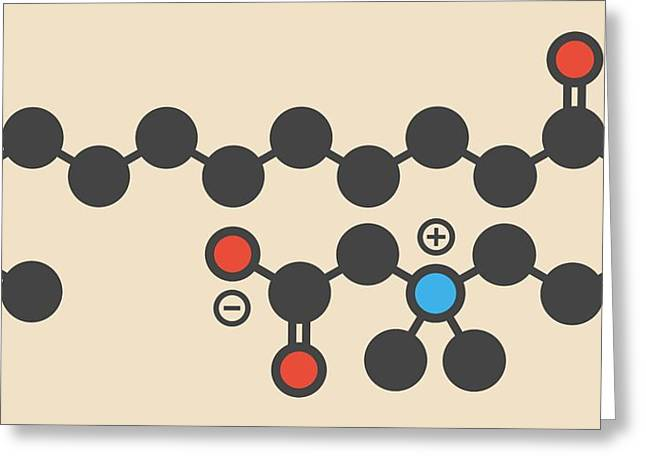 Cocamidopropyl Betaine Molecule Greeting Card by Molekuul