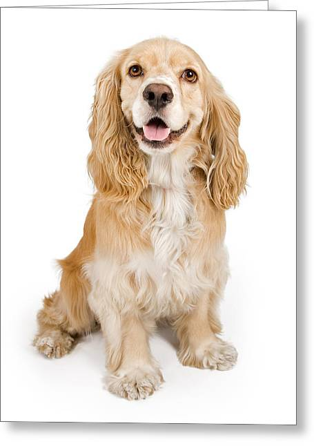 Cocker Spaniel Dog Isolated On White Greeting Card by Susan Schmitz