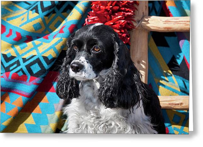 Cocker Spaniel Sitting Greeting Card by Zandria Muench Beraldo